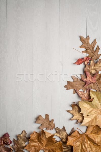 Autumn foliage  Stock photo © homydesign