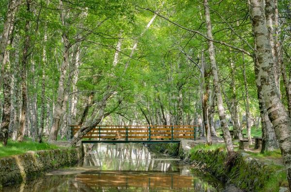 公園 自然 ポルトガル 家 ツリー 春 ストックフォト © homydesign
