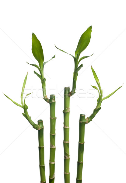 Bamboo Stock photo © homydesign