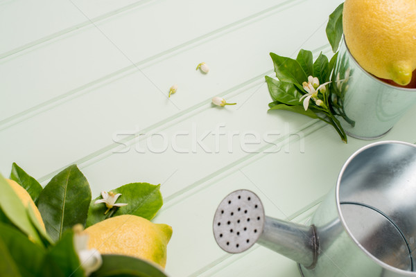 Limes and vintage metal retro watering cans Stock photo © homydesign