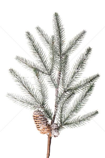 Christmas tree branch Stock photo © homydesign