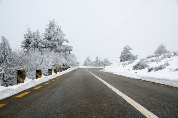Snowy Road Stock photo © homydesign