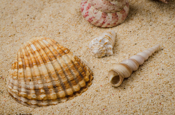 Sea shell and conch on sand Stock photo © homydesign