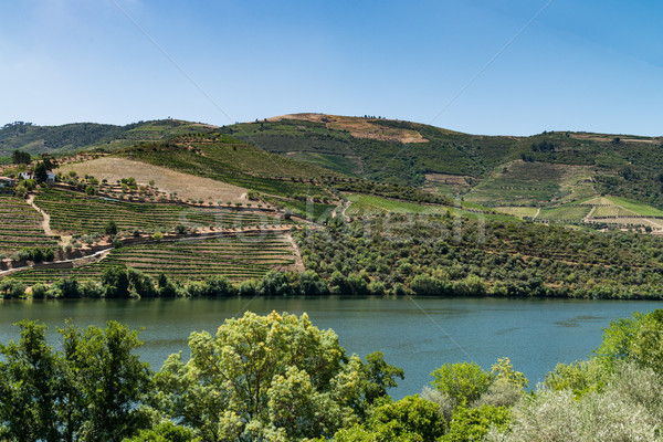 Point of view shot of terraced vineyards in Douro Valley Stock photo © homydesign