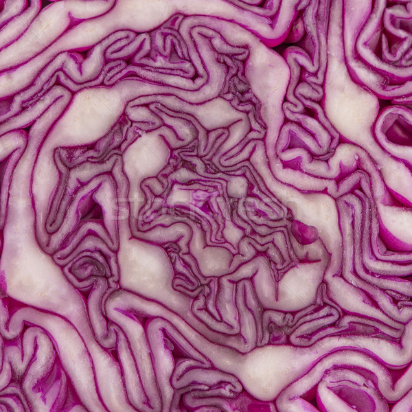 Close up view of a purple cabbage Stock photo © homydesign