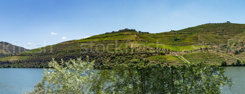 Stock photo: Point of view shot of terraced vineyards in Douro Valley