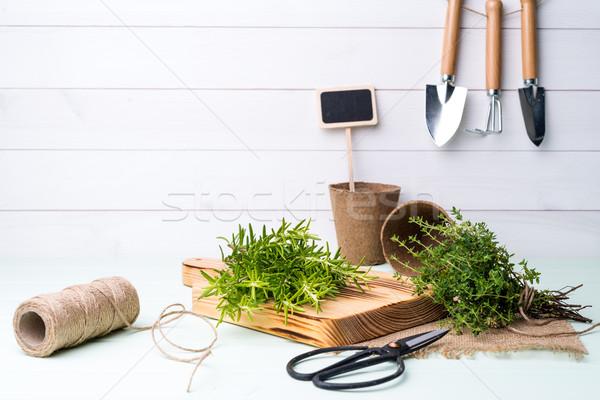 ローズマリー はさみ 薬 生活 植物 ストックフォト © homydesign