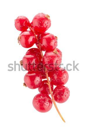 Kırmızı frenk üzümü beyaz meyve yaz Stok fotoğraf © homydesign