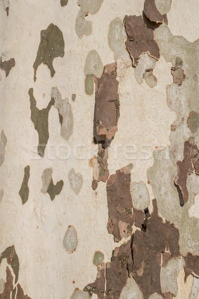 Primer plano agrietado piel árbol textura resumen Foto stock © homydesign