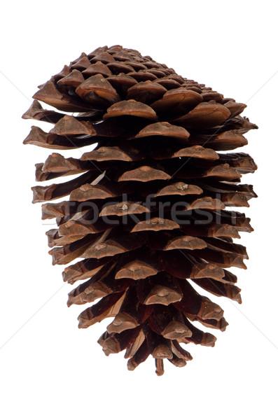 Pin cône naturelles isolé blanche nature Photo stock © homydesign