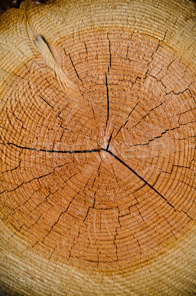 Foto stock: Rachar · madeira · spiralis · abstrato · estilo · parede