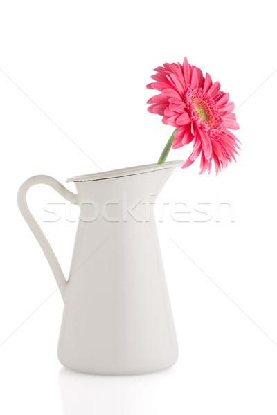 Pink gerbera daisy flower Stock photo © homydesign