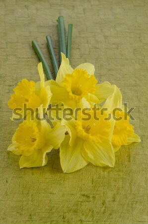 Jonquil flowers Stock photo © homydesign