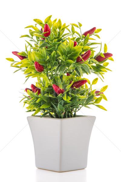 Small decorative chilli pepper plant Stock photo © homydesign