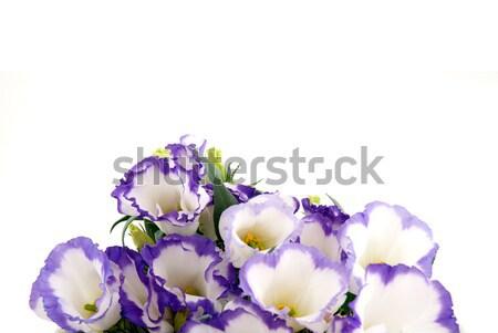 Beautiful violet flower Stock photo © homydesign