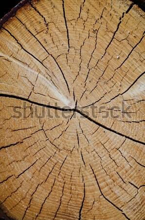 Alten Kiefer geschnitten Textur Baum Holz Stock foto © homydesign