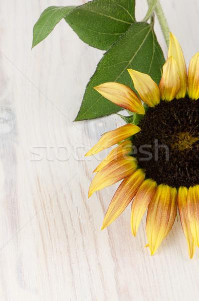 Ayçiçeği çiçek güzel iyon ahşap beyaz Stok fotoğraf © homydesign
