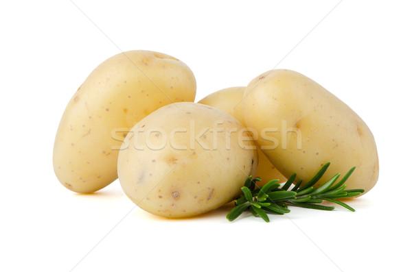 Nouvelle pommes de terre vert herbes isolé blanche Photo stock © homydesign