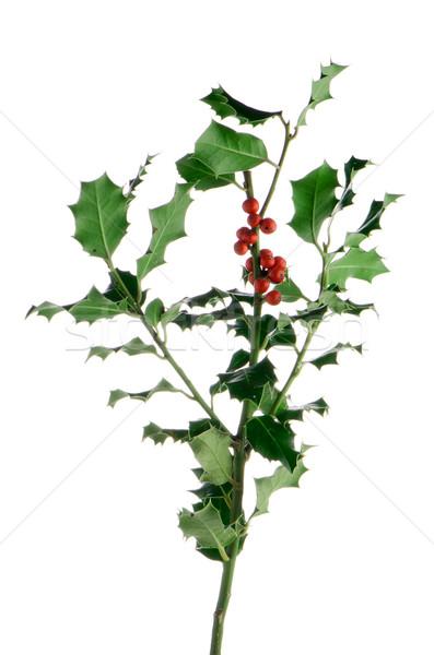 Foto d'archivio: Natale · ramo · rosso · frutti · di · bosco · isolato · bianco