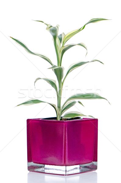 Houseplant Stock photo © homydesign