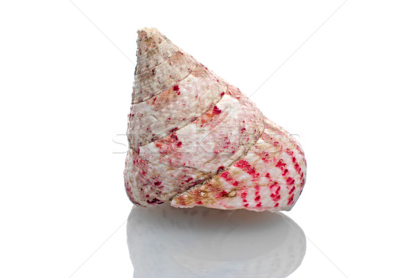 Sea shell Stock photo © homydesign