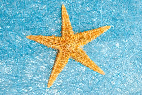 Sea star Stock photo © homydesign