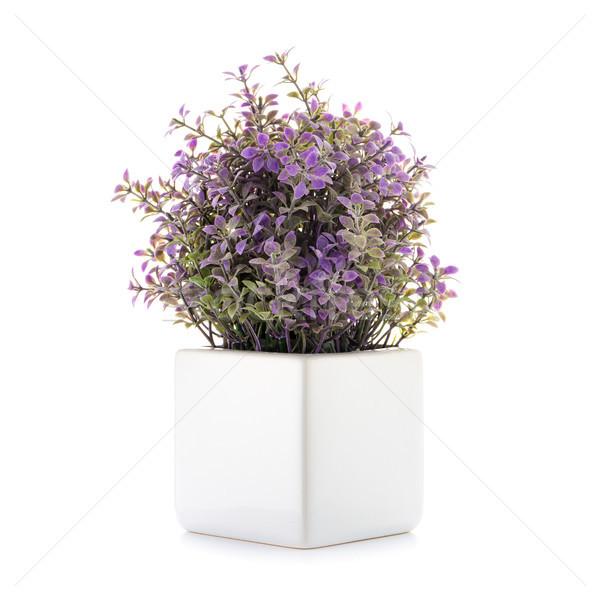Faible décoratif usine céramique vase isolé Photo stock © homydesign