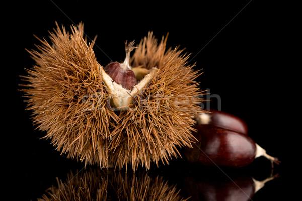 Chestnuts on a black reflective background Stock photo © homydesign