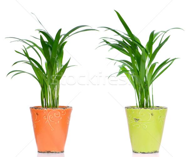 Houseplants Stock photo © homydesign