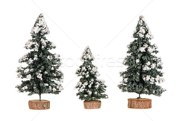 Miniature pine trees Stock photo © homydesign