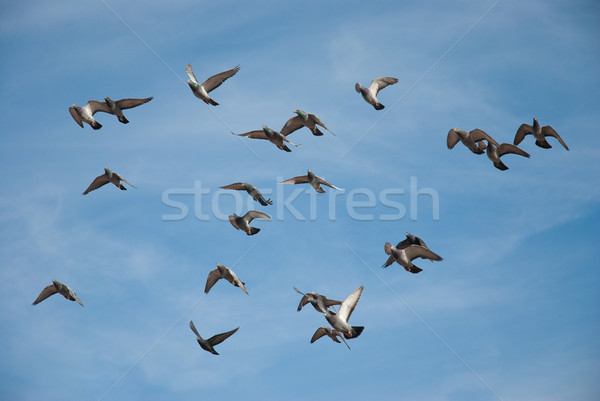 Vlucht blauwe hemel Blauw vrijheid witte Stockfoto © homydesign