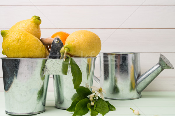 Limes on wooden table Stock photo © homydesign