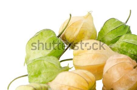 Physalis fruit  Stock photo © homydesign