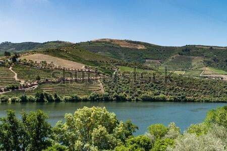 vineyars in Douro Valley Stock photo © homydesign