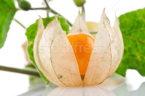 Stok fotoğraf: Meyve · beyaz · çiçek · arka · plan · yeşil · kış