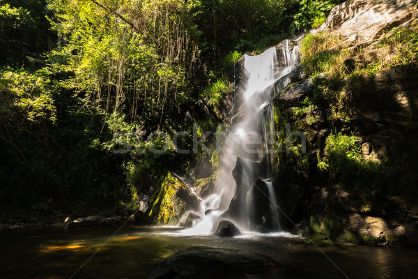 Belle cascade Portugal longue exposition eau printemps Photo stock © homydesign