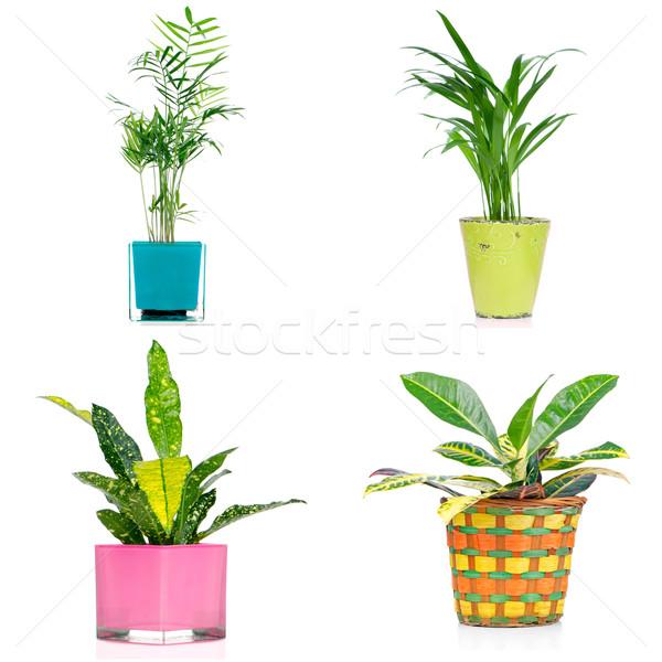 Set of houseplants Stock photo © homydesign