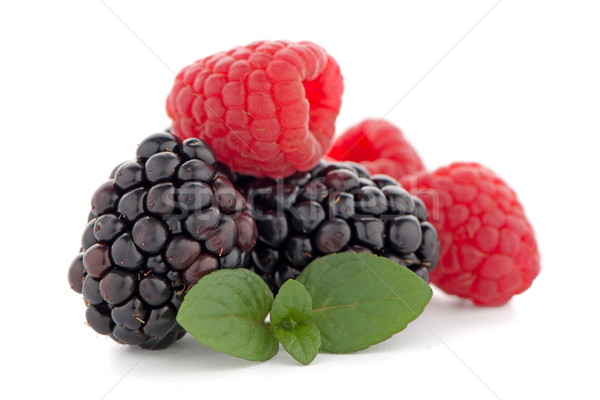 Framboises BlackBerry menthe feuille isolé blanche Photo stock © homydesign
