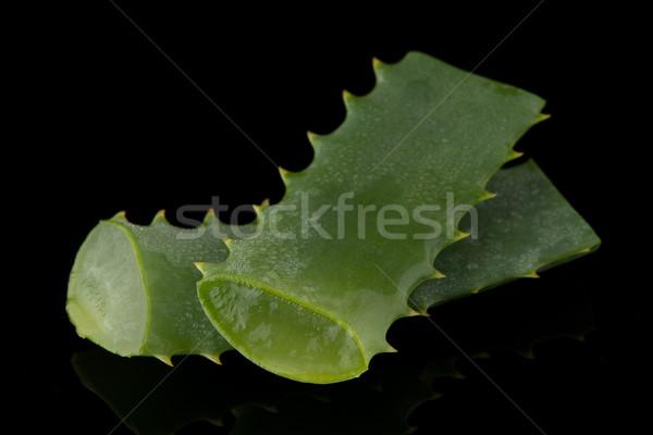 Aloë blad waterdruppels geïsoleerd zwarte Stockfoto © homydesign