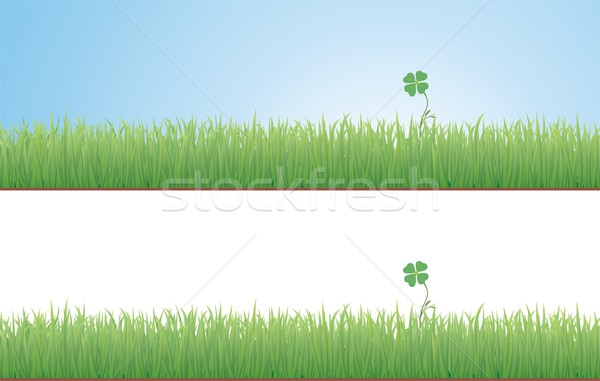Clover in the Grass Stock photo © HouseBrasil