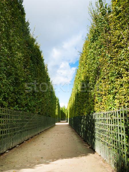 Korytarz zielone dekoracyjny wiosną drogowego charakter Zdjęcia stock © hraska
