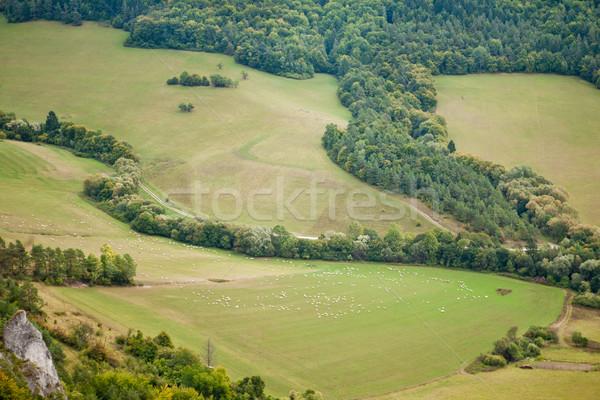 Pastures Stock photo © hraska