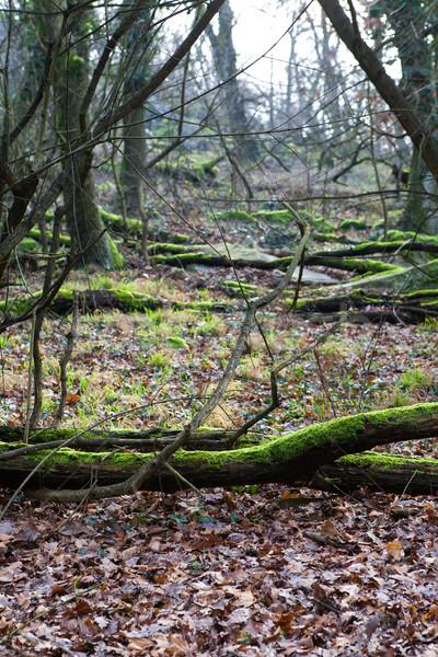 Bos vloer bomen oude boom natuur Stockfoto © hraska