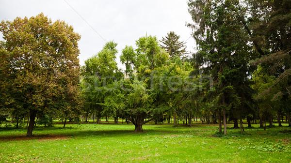 Természetes fa park fenséges széles központ Stock fotó © hraska