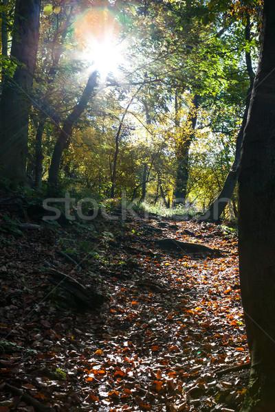 Decidue foresta scenario sole dietro terra Foto d'archivio © hraska