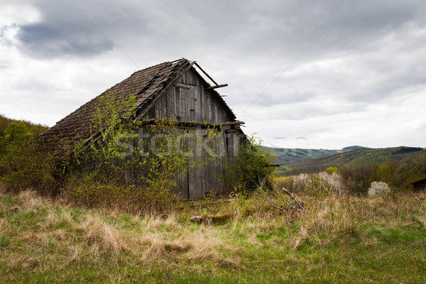 Dilapidated barn overgrown by shrubs and trees Stock photo © hraska