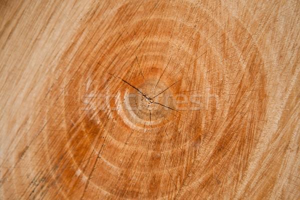 Noix arbre annuel anneaux étroite vue Photo stock © hraska