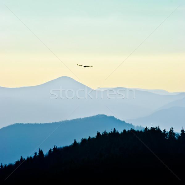 Repülés sas szabad fölött fák hegyek Stock fotó © hraska