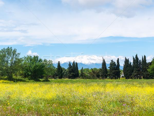 Szépség vidék virágos legelő égbolt fű Stock fotó © hraska