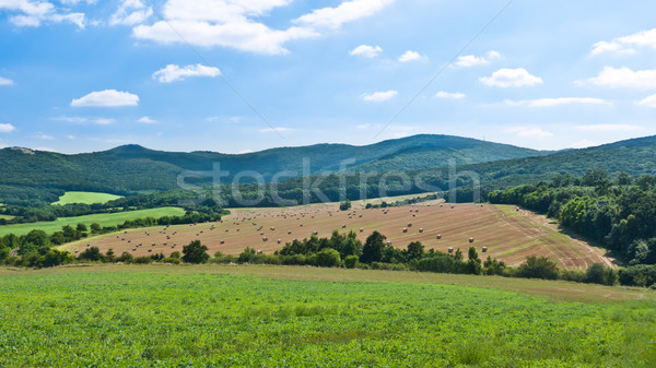 Szalmaszál gyönyörű környezet mező csomagok fű Stock fotó © hraska